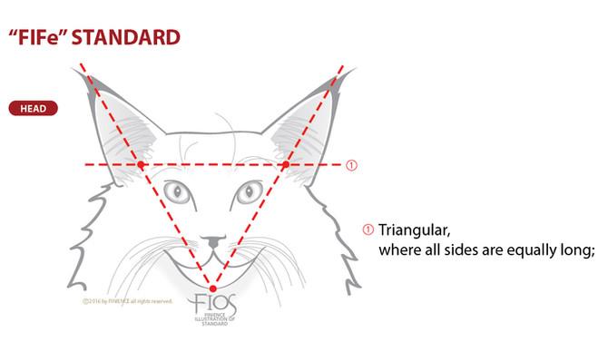"FIFe STANDARD OF ""HEAD"""