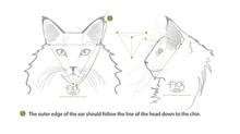 """TICA Standard of """"EAR"""""""