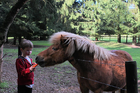 Feeding the neighbour's pony, Gingerbread Huis