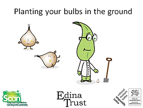 planting bulbs in the ground ppt screens