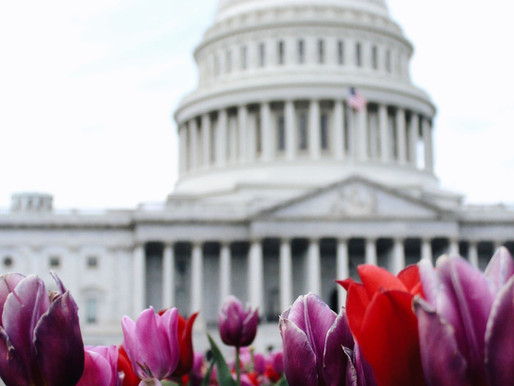 Managing Property In Washington D.C.?