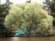 Axe-exact,  parcours Rêver Erdre, Nantes