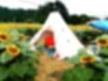 ひまわりキャンプ_edited.jpg