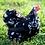 Thumbnail: Mottled Cochin Bantam
