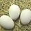 Thumbnail: Light Brown Leghorn