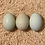 Thumbnail: Easter Egger