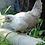 Thumbnail: Easter Egger Bantam