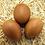 Thumbnail: Golden Cuckoo Marans