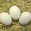 Thumbnail: White Crested Black Polish