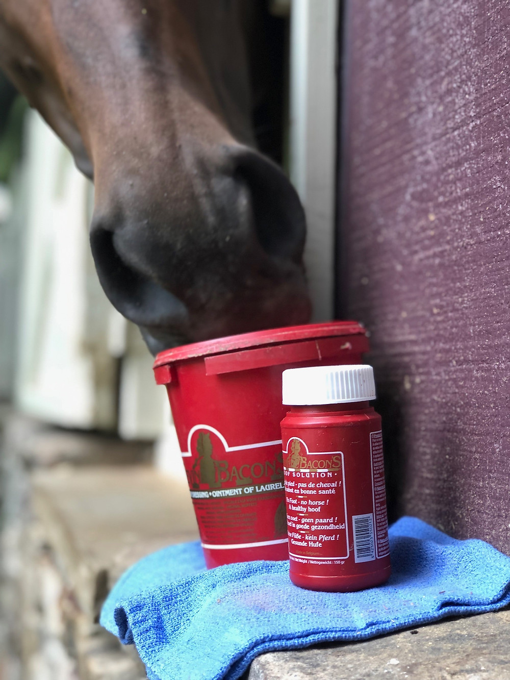 Hoof Solution and Dressing