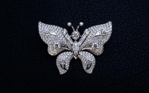 Butterfly main.jpg
