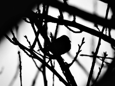 Aperture, focus, light & beauty-a brush with nature..