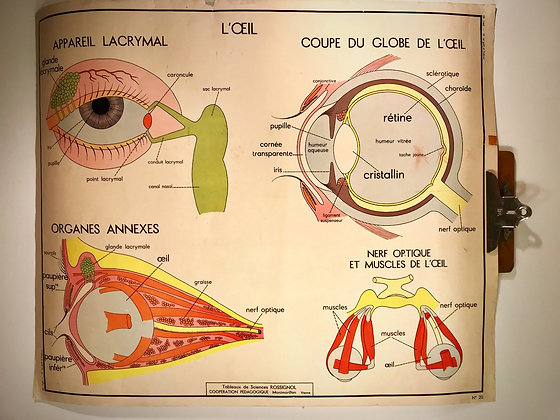 2 Sided French school 'The Senses' science poster 1950/60's