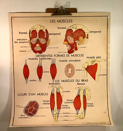 2 Sided French Science poster 1950/60