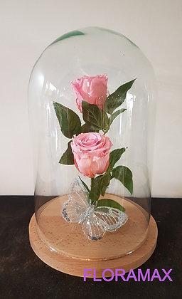 Double rose éternelle rose pâle