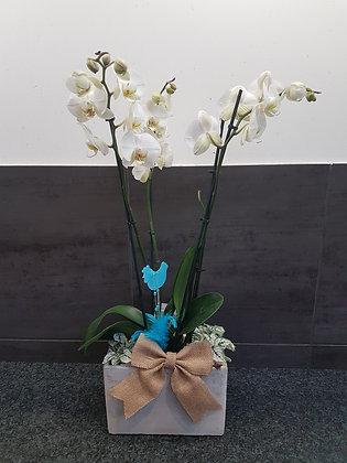 """Orchidée """"épurée"""""""