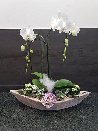 """Montage """"bateau orchidée"""""""
