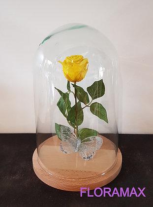 Rose éternelle jaune