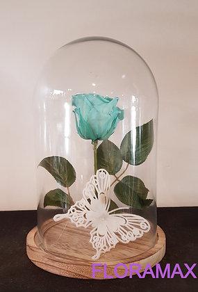 Rose éternelle turquoise