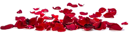 kisspng-rose-petal-stock-photography-flo