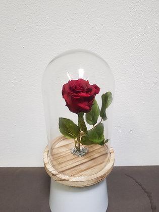 Rose éternelle sous cloche (Rouge)