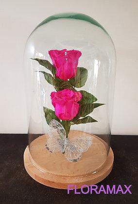 Double rose éternelle fuchsia