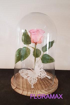 Rose éternelle rose pâle