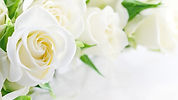 white-rose-white-roses-wallpaper-preview