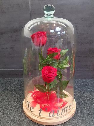 Roses éternelles sous cloche (Je t'aime)