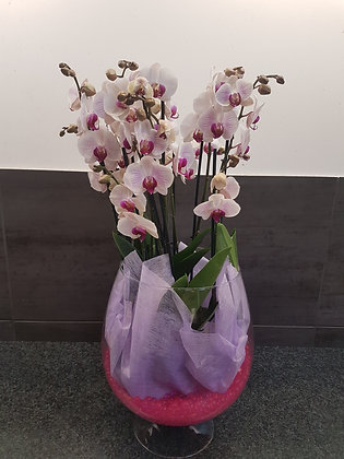 Vase orchidées