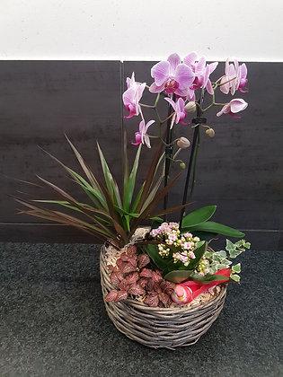 Montage orchidée osier