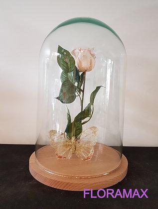 Rose éternelle beige