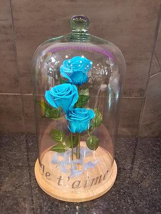 Roses éternelles sous cloche (Blue)