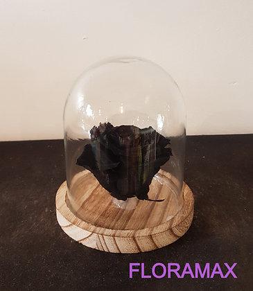Rose éternelle noire
