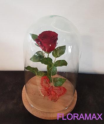 Rose éternelle bordeaux
