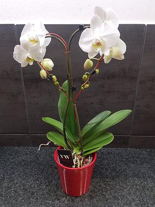 Orchidée en coeur