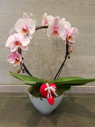 Orchidée rose arcade
