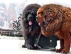 Купить вольер для крупной собаки