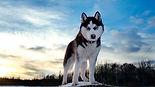 Купить вольер для алабая,купить вольер для собаки,купить уличный вольер для собаки,купить вольер для собаки недорого,купить вольер,купить вольер для крупной собаки,купить вольер для хаски,купить вольер с доставкой,