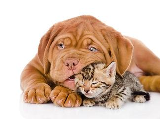 Купить вольер для собаки недорого