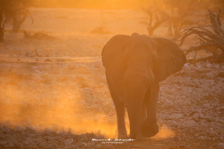 Elephant dans la lumière