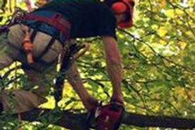 Tree Trimming Tx Tree Pruning Texan Industries