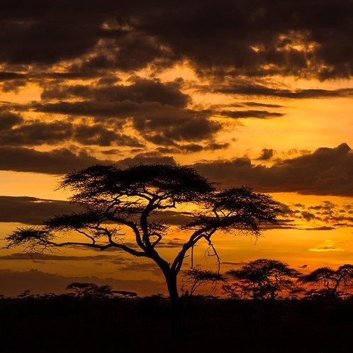 ESSÊNCIA SILVER MADEIRA AFRICANA - 380155