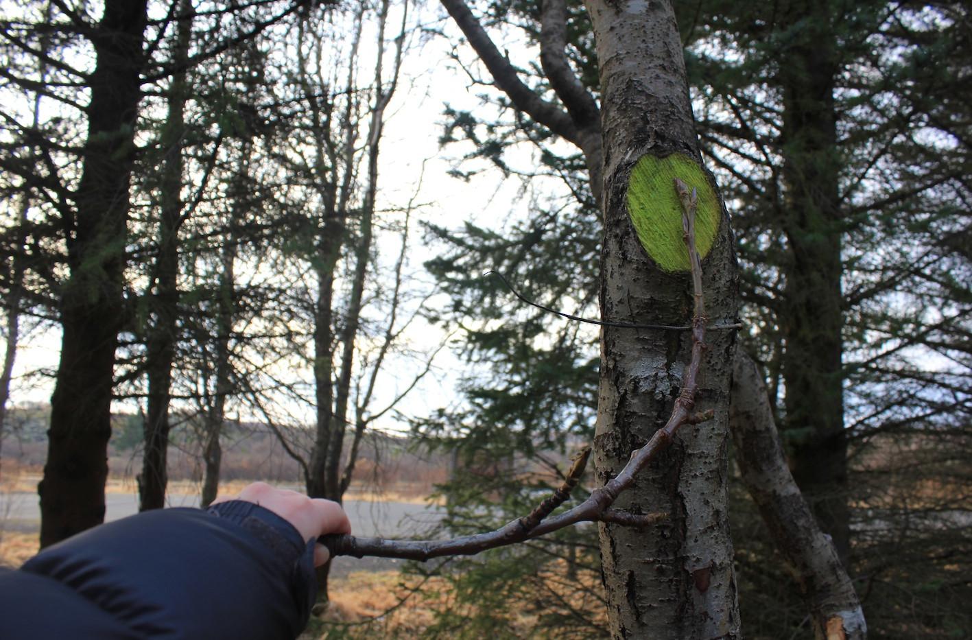 Karlotta Blöndall's Fálmar, Heiðmörk
