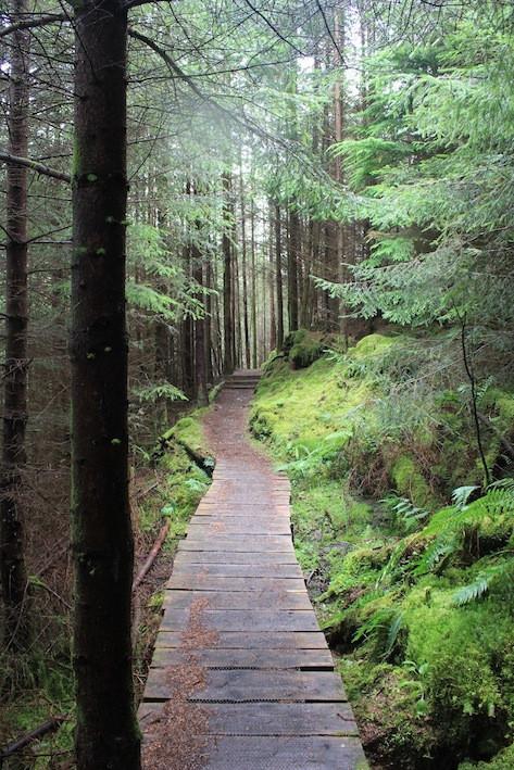 Wooden footpath towards Outlandia