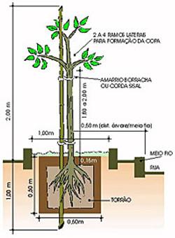arborizacao_plantio1