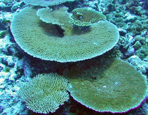 Oceanário IPXMAR-Arraial do Cabo