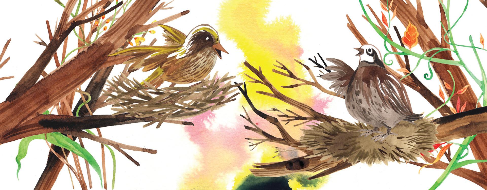 06 Burung Tempua dan Burung Puyuh