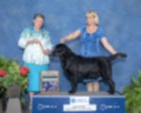 jayce best of breed 2.jpg