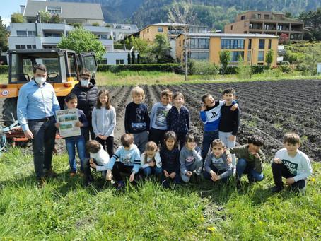 Mai 2021: Schüler bei der Kartoffelpflege auf dem Ernährungsfeld in Vaduz